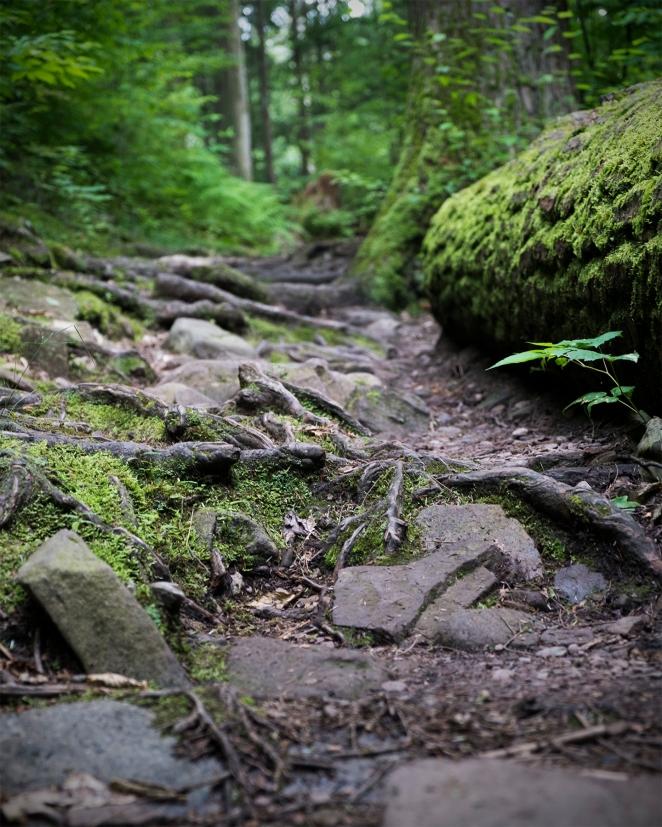 uneasy path.jpg